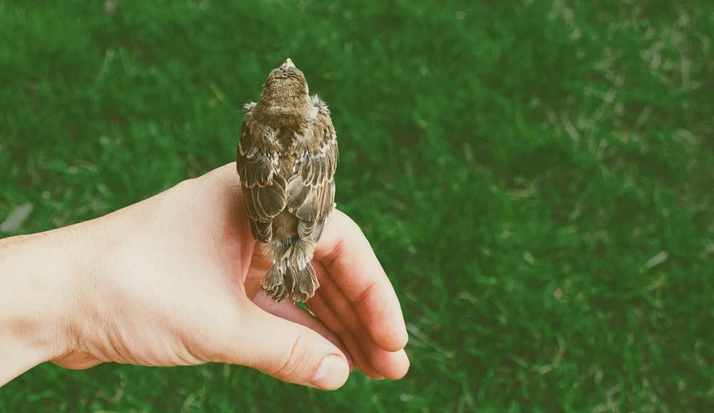 Über uns: Energieberatung, Nachhaltigkeit, bessere Umwelt, Schornsteinfeger, Umweltschutz Vogel auf Hand über Rasenfläche